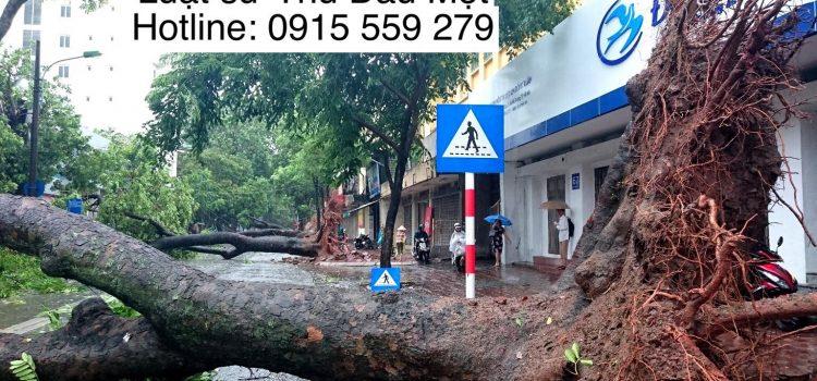 cây đổ khi mưa bão